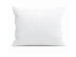 sloop wit